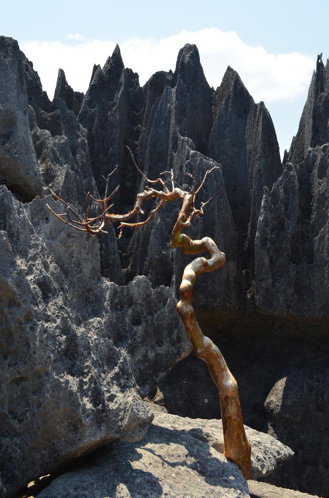 tsingy-tree