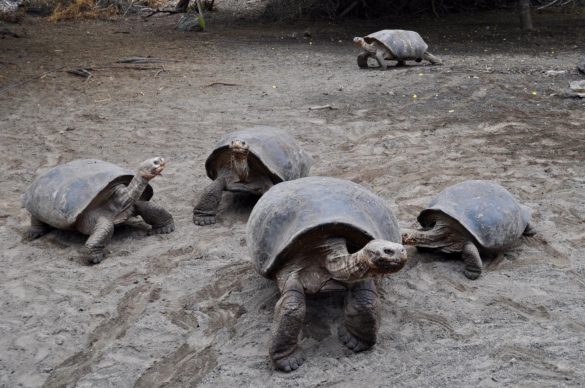 tortoise-2886057_1920
